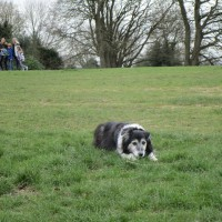 Box Hill Country Park dog walks, Surrey - Surrey dog walks and dog-friendly pubs.JPG