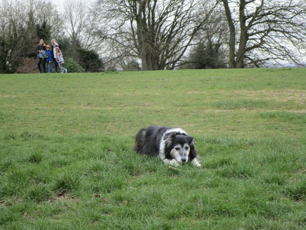 Box Hill Country Park dog walks, Surrey - Surrey dog walks and dog-friendly pubs.JPG
