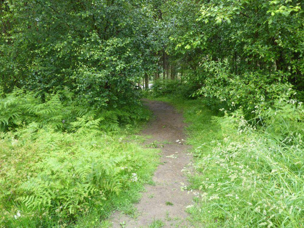 A dog walk in the woods near Coate Moor, North Yorkshire - North Yorkshire dog walks