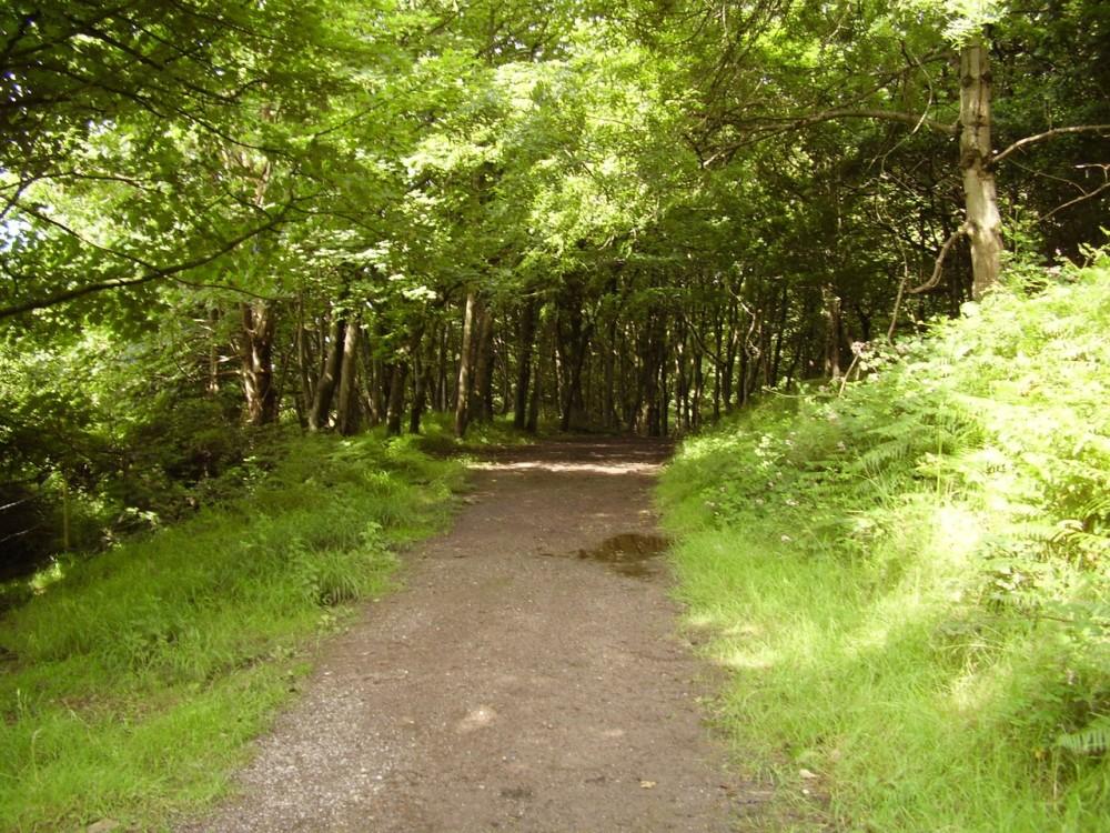 M4 junction 38 dog walk near Port Talbot, Wales - Dog walks in Wales