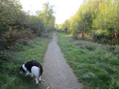 West Blean and Thornden Wood dog walks, Kent - Driving with Dogs