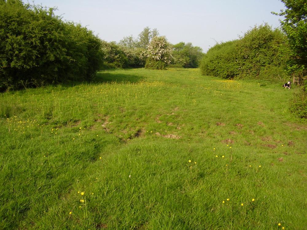 M11 Junction 7 dog walk and dog-friendly pub near Epping, Essex - Dog walks in Essex