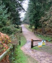 Black eater dog walk, Hampshire - Dog walks in Hampshire