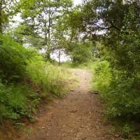M4 junction 40 dog walk near Port Talbot, Glamorgan, Wales - Dog walks in Wales