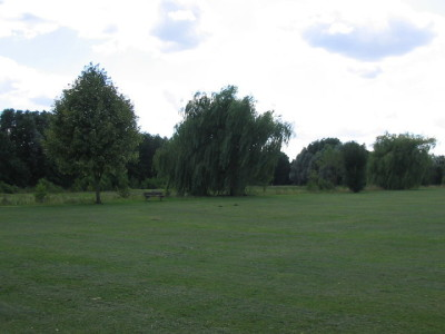 Calcot Linear Park, Berkshire - Driving with Dogs