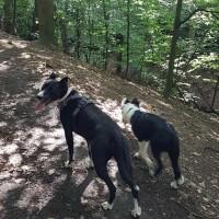 Sheffield dogwalking - Graves Park, Yorkshire - 40044406_10155362305686330_3764710457542180864_n.jpg