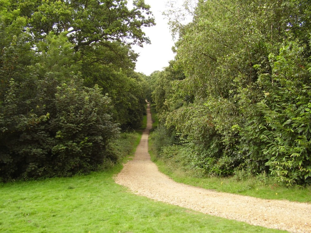 A3 Country park dog walks, Hampshire - Dog walks in Hampshire
