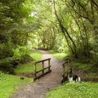 M4 junction 45 dog walk near Swansea, Glamorgan, Wales - Dog walks in Wales