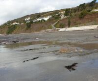 Downderry dog walk and dog-friendly beach, Cornwall - 20191016_115641.jpg
