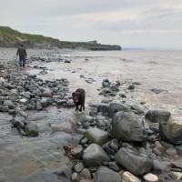Kilve Beach - dog-friendly, Somerset - CF63A2B6-C310-4231-83D0-EC4B73AC6921.jpeg