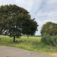 Ferry Meadows dog walk near Peterborough, Cambridgeshire - 1629BD69-4E6A-4637-9EAD-EFA47CCBCBDA.jpeg