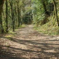 Woodland and riverside dog walk near Plymouth, Devon - Dog walks near Plymouth.jpg