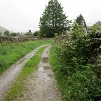 Moorland dog walk and dog-friendly pub, Yorkshire - Yorkshire dog-friendly pub and dog walk