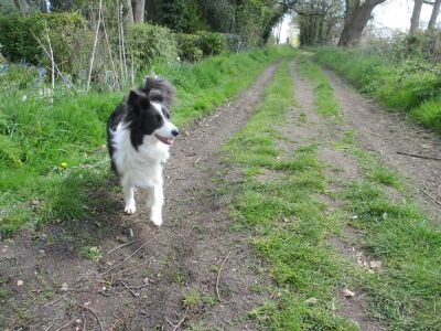 A dog walk beside the River Thurne, Norfolk - Driving with Dogs
