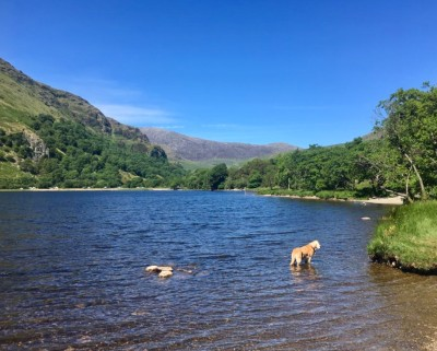 A498 Stunning lake and dog walk, Wales - Driving with Dogs