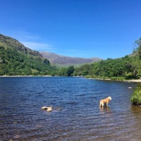 A498 Stunning lake and dog walk, Wales - 62819956-25EC-4C5C-8574-456378F1DB50.jpeg