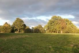 A10 dog walk near Cheshunt, Hertfordshire - Driving with Dogs