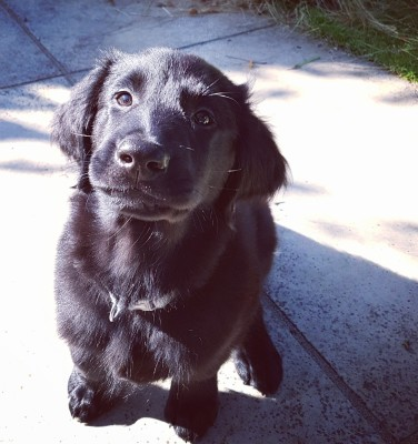 KatyShuroo - Driving with Dogs