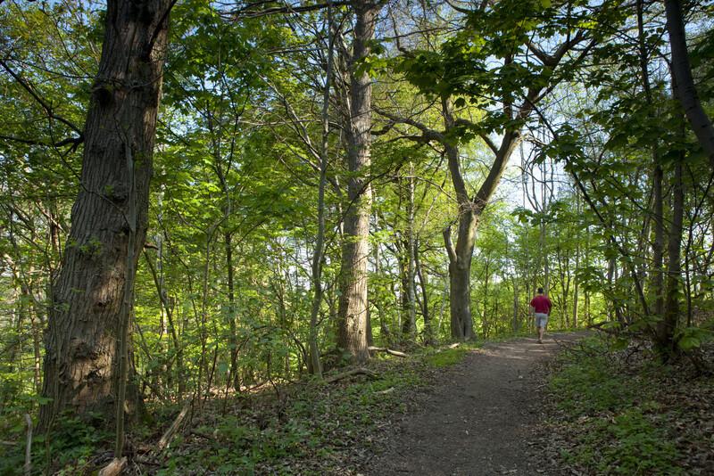 Woodland dog walk near Halling, Kent - Holly-Hill dog walk.jpg