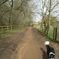 Stoke Woods (near Bicester) dog walk, Oxfordshire - dog walk in Oxfordshire