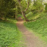 M11 Junction 11 Wandlebury dog walk, Cambridgeshire - Dog walks in Cambridgeshire