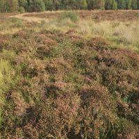 A66 Woodland dog walk and nature reserve, Cumbria - dog walks in cumbria.jpg
