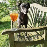 Dog-friendly pub with B&B near York, North Yorkshire
