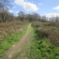Winterfold dog walk near Farley Green, Surrey - Surrey dog walks.JPG