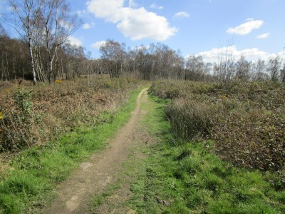 Winterfold dog walk near Farley Green, Surrey - Driving with Dogs