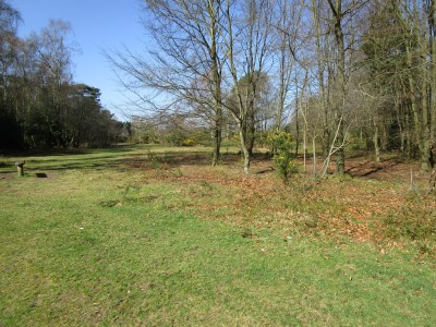 Dog walk on the Common near Haslemere, West Sussex - Driving with Dogs