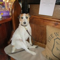 Dog-friendly pub and dog walk near Robertsbridge, East Sussex - Dog-friendly pubs with dog walks East Sussex.JPG