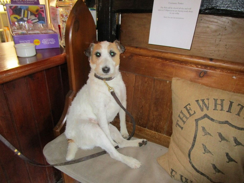 Dog-friendly pub and dog walk near Robertsbridge, East Sussex - Dog-friendly pubs with dog walks East Sussex.JPG
