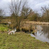 Local Dog Walk: Wheatacre Woods, Lancashire - IMG_20200307_142212.jpg