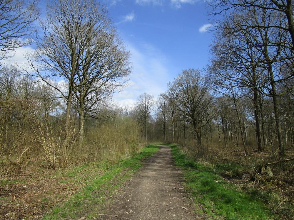 Woodland dog walk and dog-friendly pub, Worcestershire - Dog walks in Worcestershire