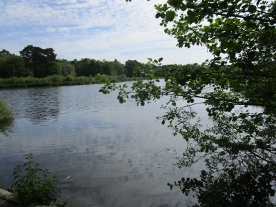 A382 Country Park near Newton Abbot, Devon - Driving with Dogs