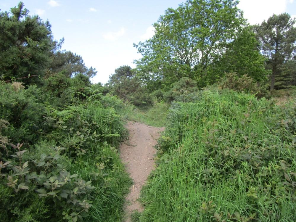 Heathland dog walk near East Budleigh, Devon - Devon dog-walking places.JPG