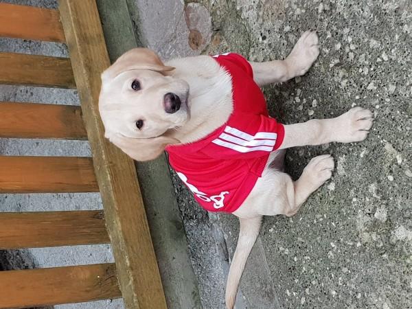 Buddy posing