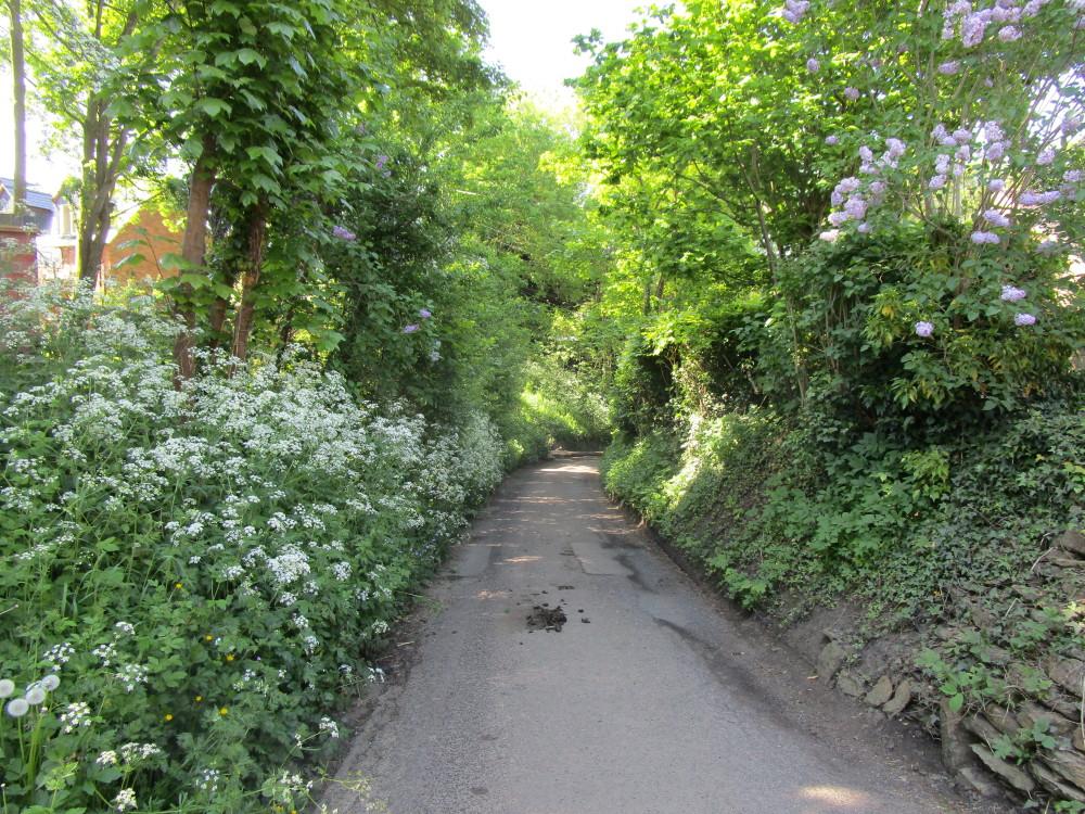 Long Buckby dog-friendly pub and dog walk, Northamptonshire - Dog walks in Northamptonshire