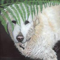 JCW Pet Portraits, Staffordshire - 09AC1E2D-413C-45C9-BA41-428676618618.jpeg