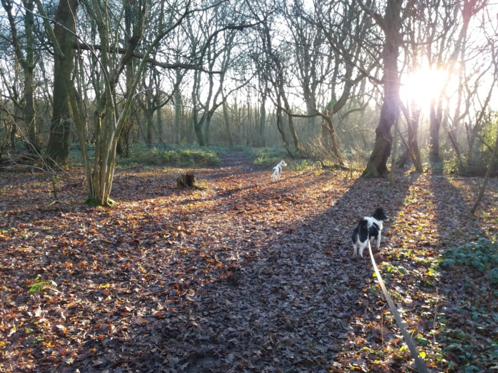 Dog walk with Woods, Tracks, Fields, Golf Course!, Leicestershire - 31F05C3F-9544-448C-BFBF-F2051FEF126A.jpeg