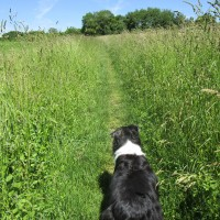 Kidlington area dog walk and dog-friendly pub, Oxfordshire - Oxfordshire dog walk and dog-friendly pub