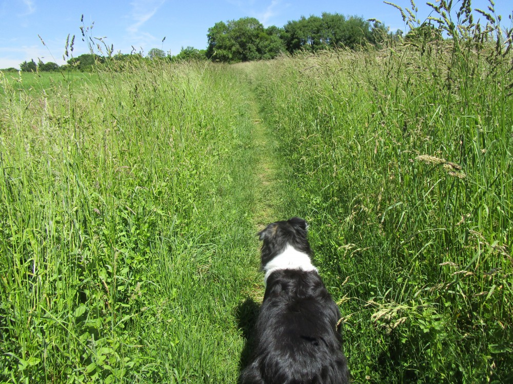 Kidlington area dog walk and dog-friendly pub, Oxfordshire - Oxfordshire dog walk and dog-friendly pub