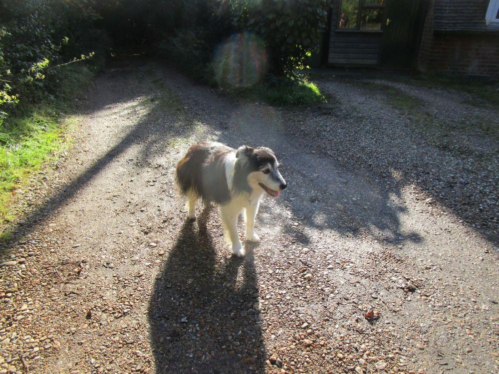 M4 dog friendly pub and dog walk near Newbury, Berkshire - Berkshire dog-friendly pub and dog walk