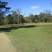 A3 Country Park dog walks, Surrey - Surrey dog walks and dog-friendly pubs.JPG