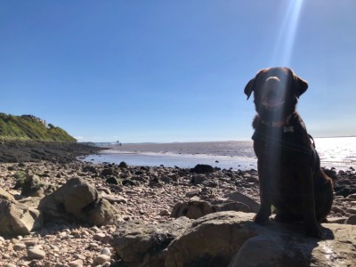 Little rocky bay - dog-friendly beach, North Somerset - Driving with Dogs