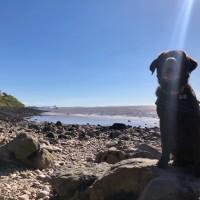Little rocky bay - dog-friendly beach, North Somerset - CF7DA10F-FC8F-48B3-AF2F-F6B6526B9754.jpeg