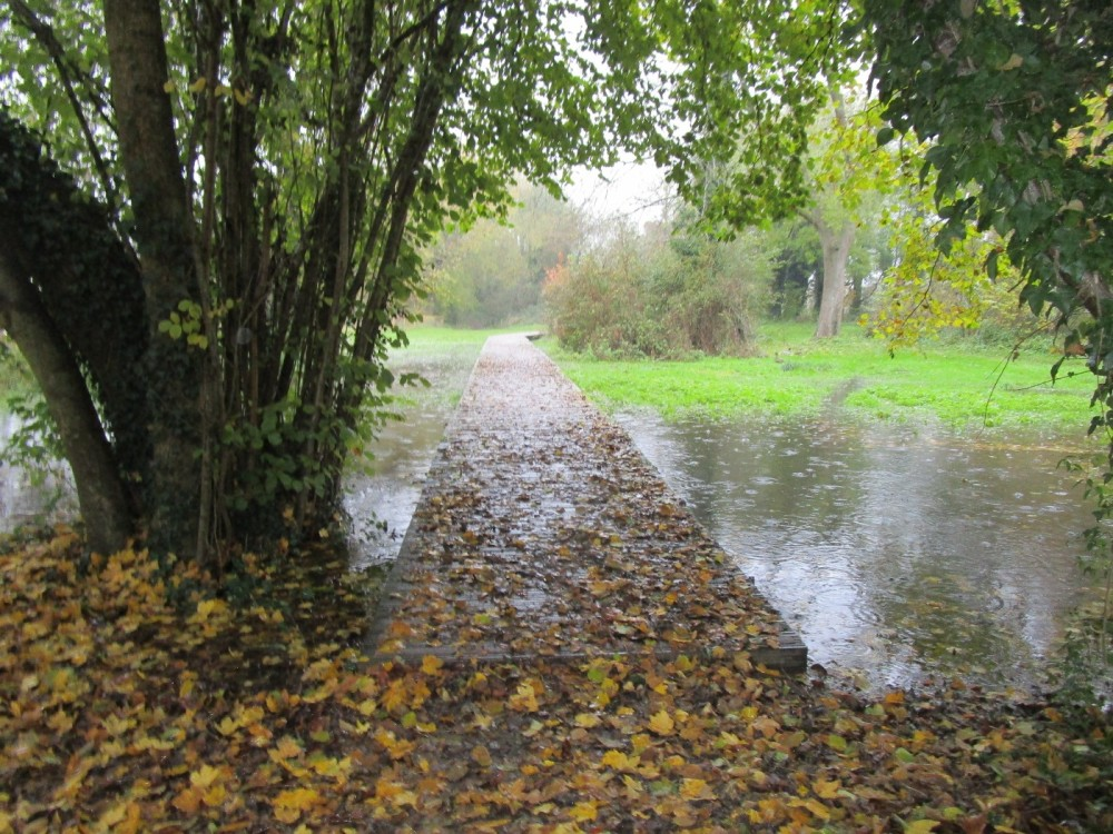 A429 lakeside dog walk near Cirencester, Gloucestershire - IMG_6107.JPG