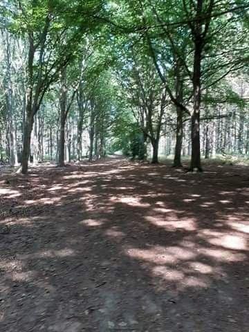 Woodland dog walk with loads of paths, Norfolk - 4D071D45-0B71-4401-8A77-D281A52D6FA3.jpeg