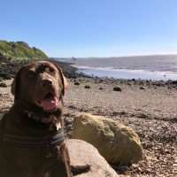 Little rocky bay - dog-friendly beach, North Somerset - 3FF05F33-6306-4F30-8C6D-D2A7D903AA14.jpeg