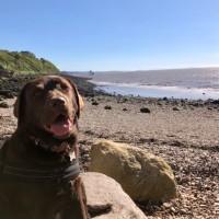Little rocky bay - dog-friendly beach, North Somerset - 3FF05F33-6306-4F30-8C6D-D2A7D903AA14.jpeg
